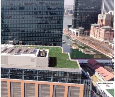26 Green Roof Pictures