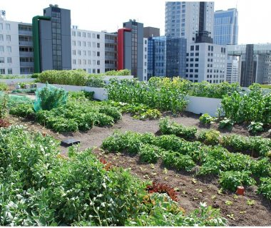 14 Food Roof for educational purposes Green Roof Pictures
