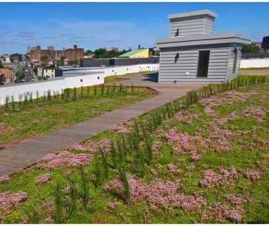 10 Green Roof Pictures