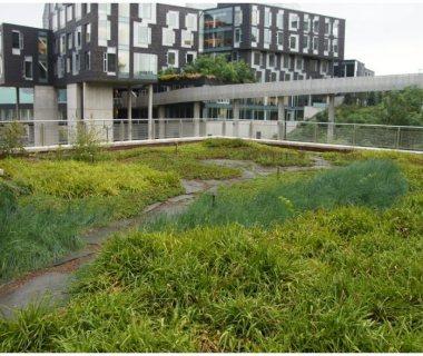 75 Semi Intensive Green Roof