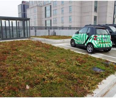 66 Green Roof Pictures