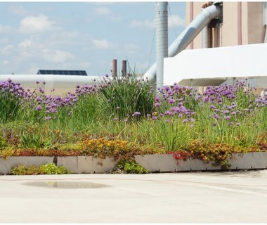 83 Sustainable Green Roofs