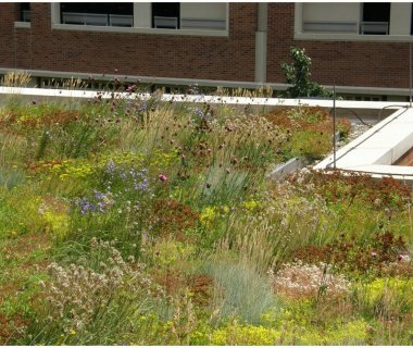 35 Diversity Green Roof Pictures