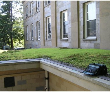 85 Green Roof Pictures