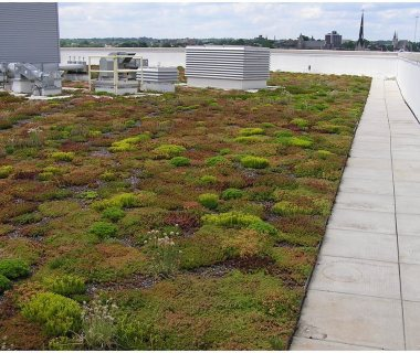 47  Green Roof Pictures