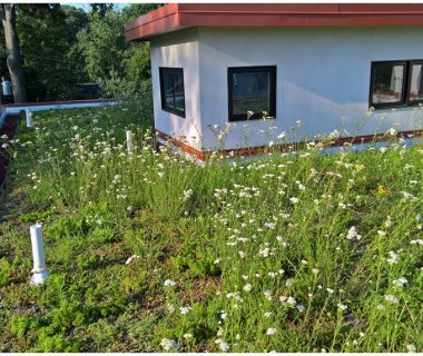 33 Honey Bees on Green Roof