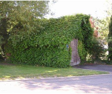 19 Natural Greenery