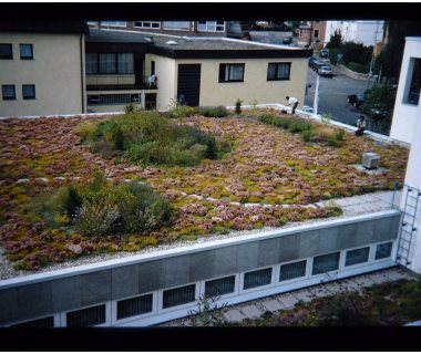 17 getting extensive green roofs