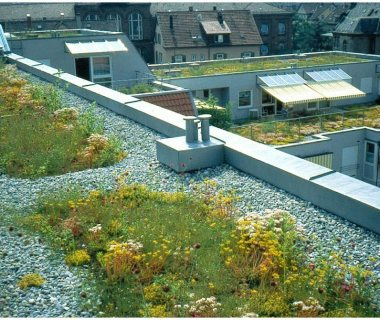 03 Green Roof Pictures