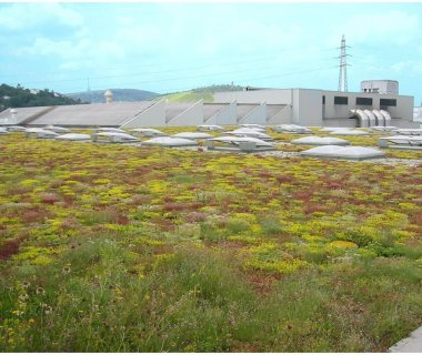 07 Green Roof Pictures