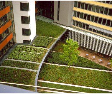 55 Green Roof Technology