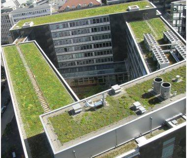 66 Green Roof Technology