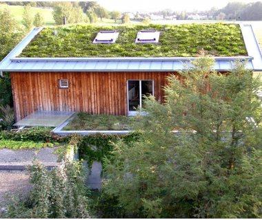 81 Green Roof Technology