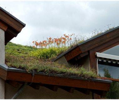83 Green Roof Technology