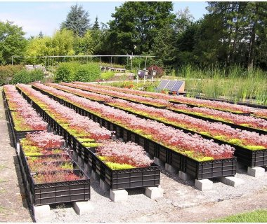 42 Green Roof Pictures
