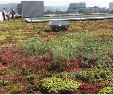 85 Green Roof Technology