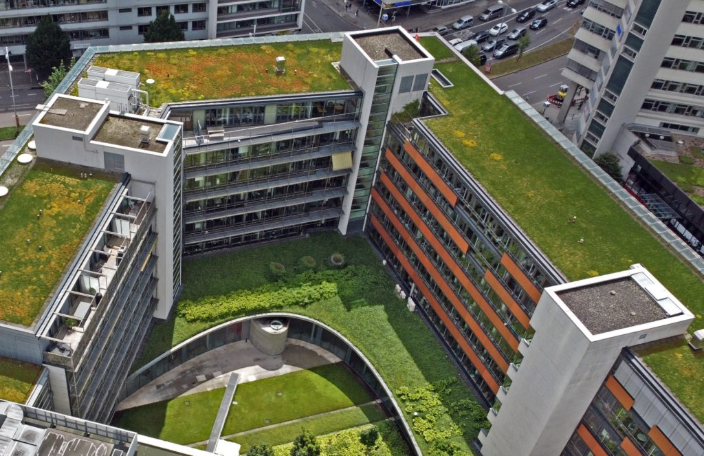 30 years old green roof