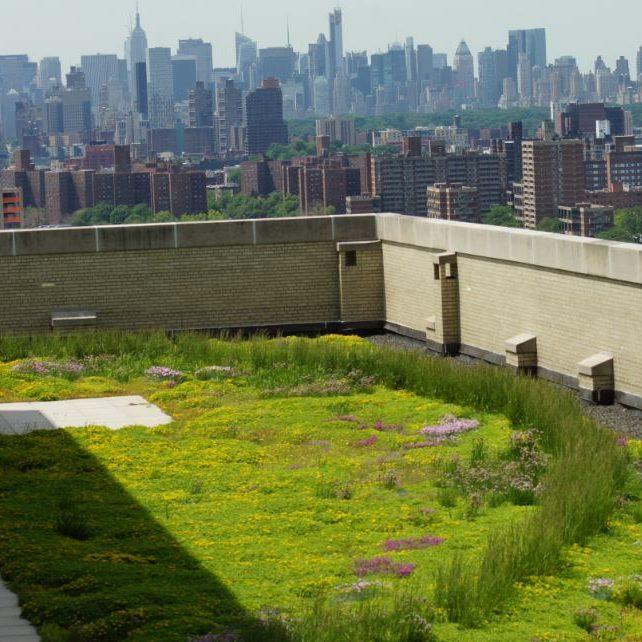 Best Green Roof
