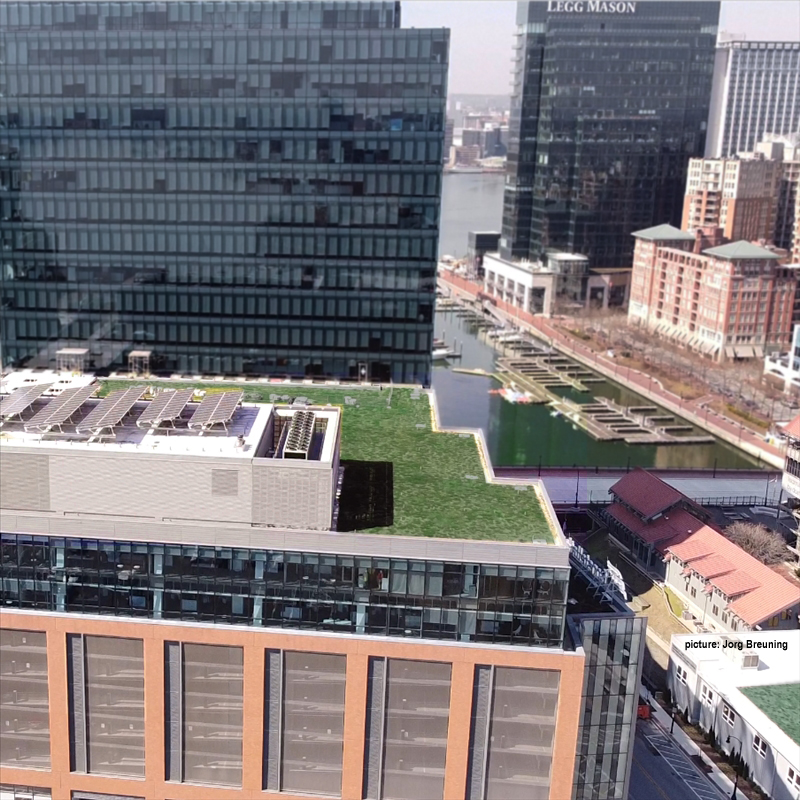 Baltimore Green Roofs