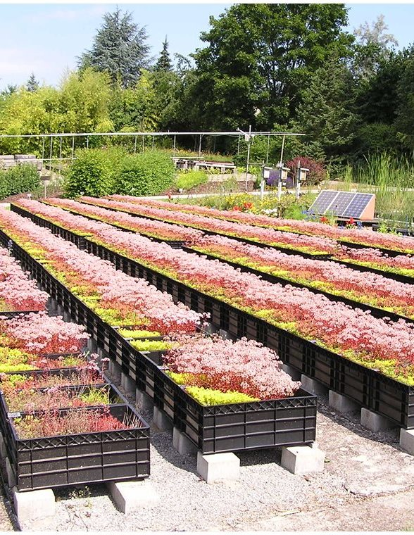 green roof research