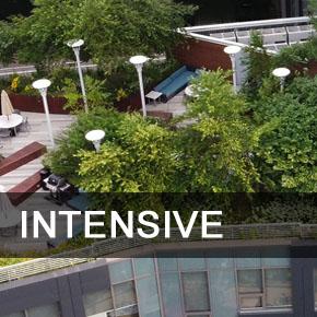 intensive green roof